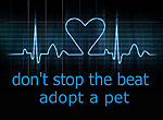 don't stop the beat, adopt a pet graphic